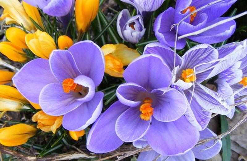 Rimedi floreali e vis naturae sanatrix