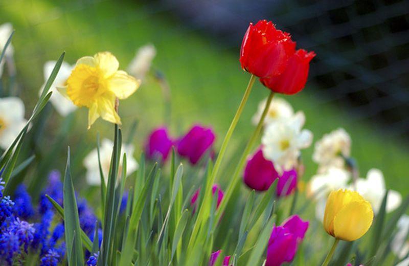 Oli essenziali e malanni di primavera