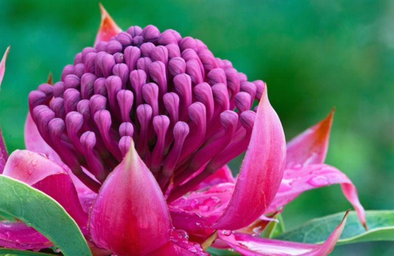 L'essenza umana e le essenze floreali di Ian White