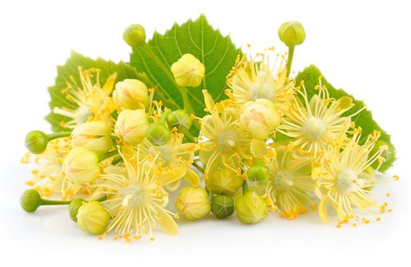 La tisana al tiglio: proprietà e ricetta Cure Naturali.it