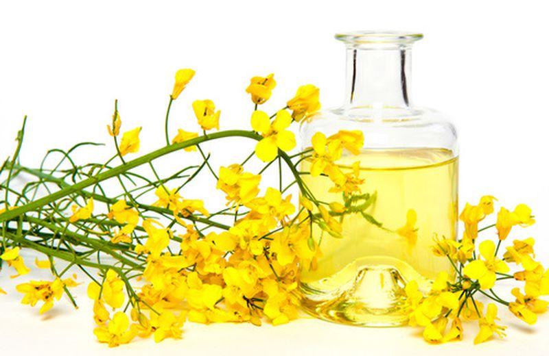 L'uso alimentare dell'olio di colza