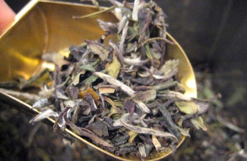 Le proprietà del tè bianco