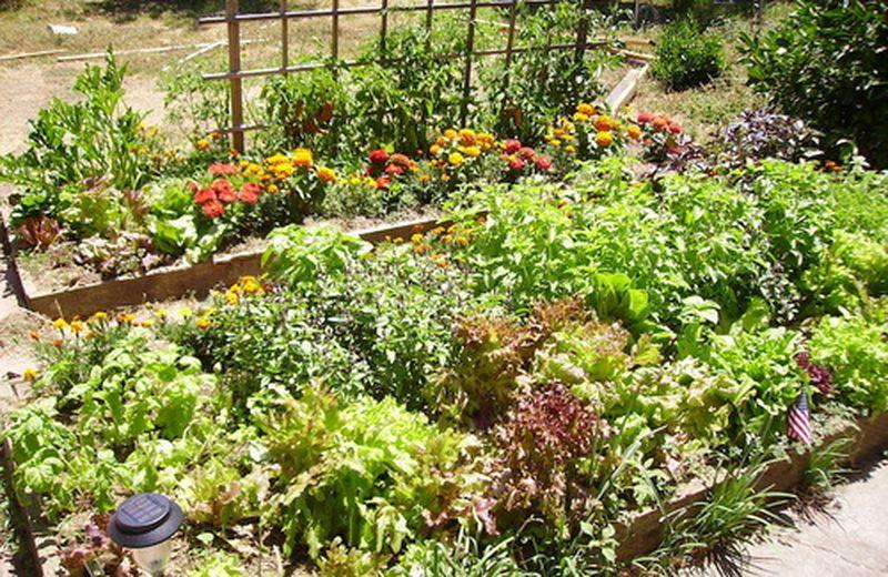 La coltivazione biodinamica