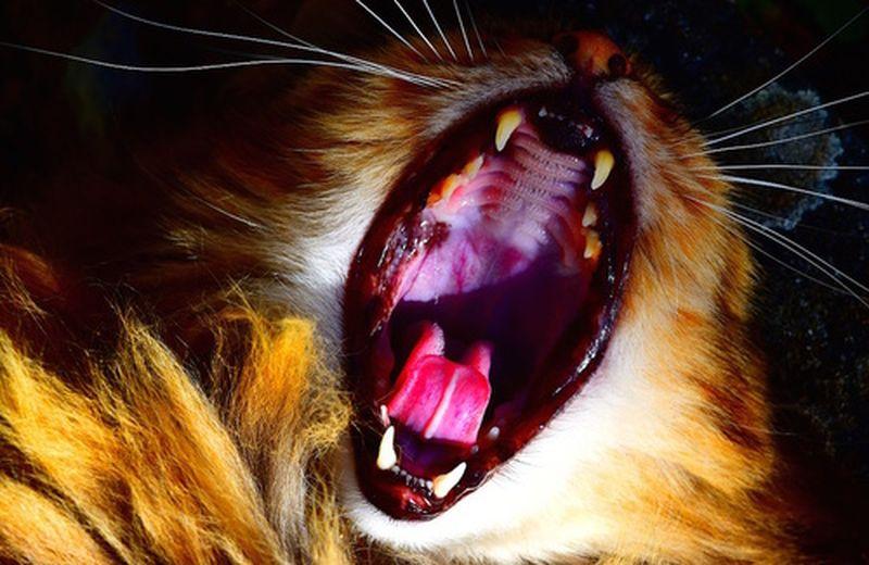 Dentosofia: la saggezza dei denti
