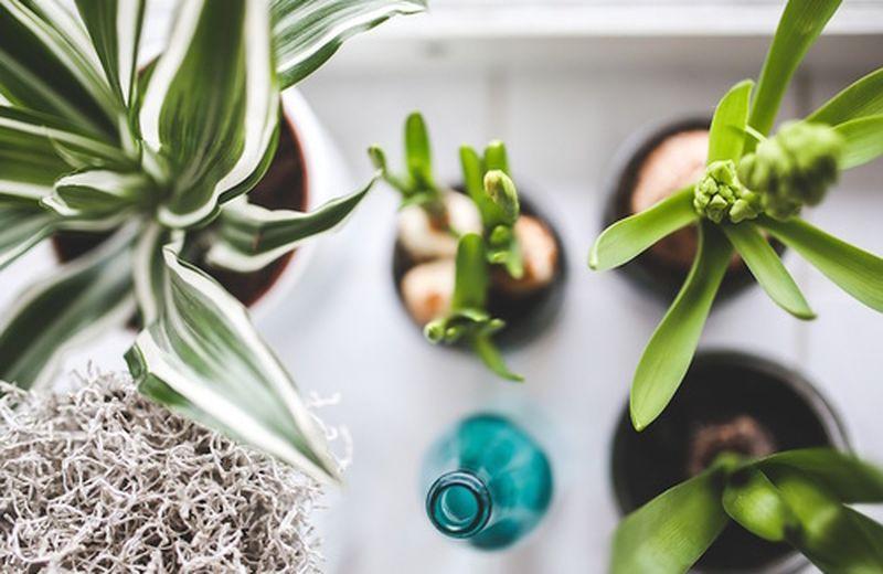 10 piante per purificare l'aria di casa