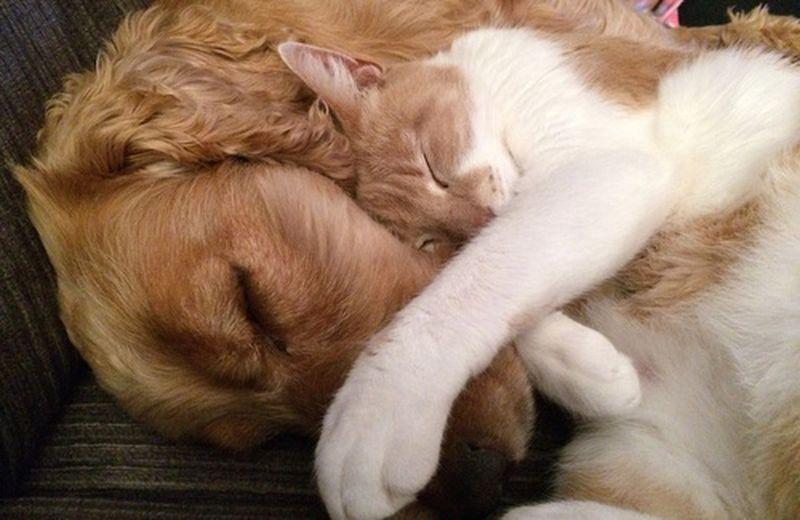 Oli essenziali per gli animali: come e per cosa usarli
