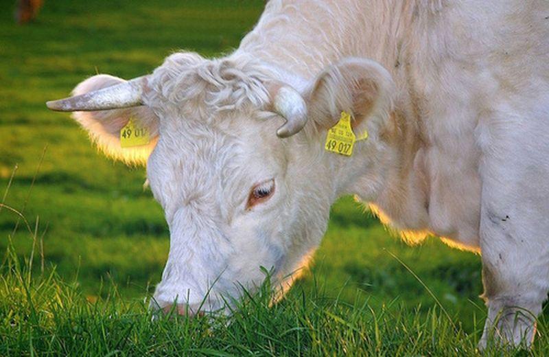 Osservazioni sul consumo di carne