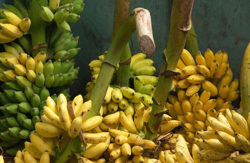 Le varietà dimenticate di banana