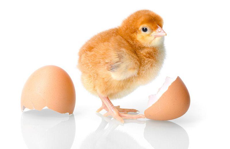 Come sostituire le uova?