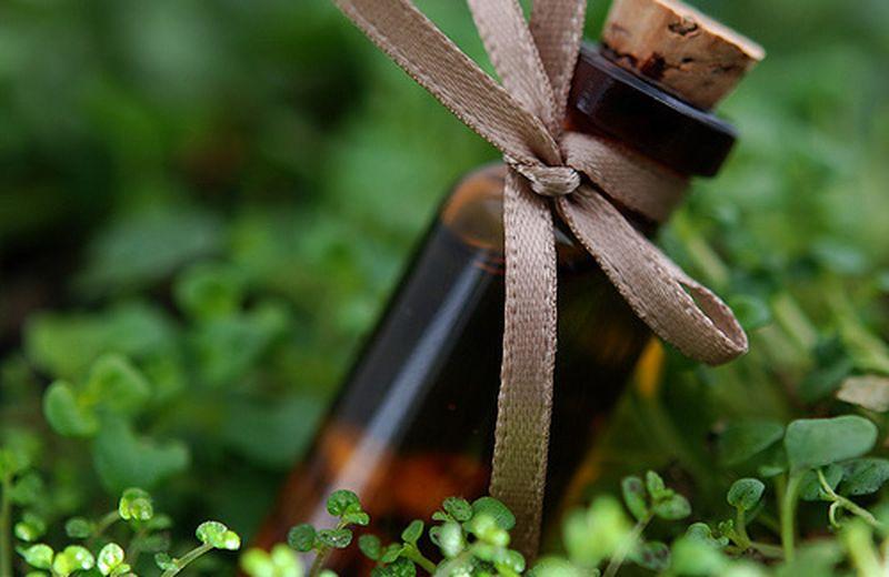 Giù le mani dalle erbe medicinali! Tutto sulla Direttiva europea
