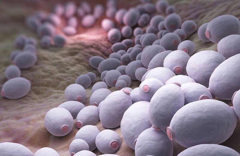 Candida intestinale: sintomi e rimedi naturali