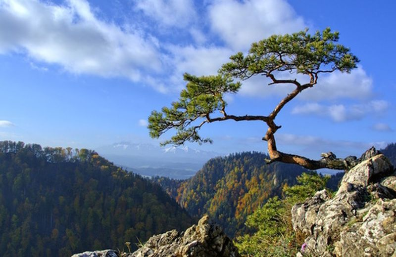 La resilienza e la malattia