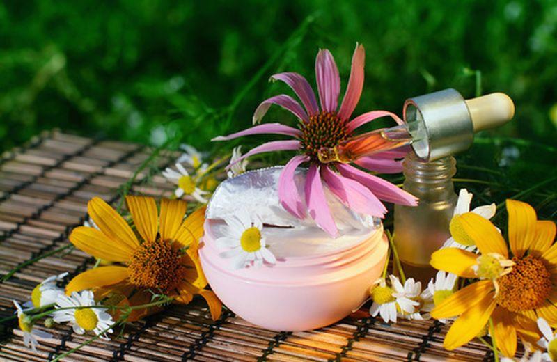 Crema con l'echinacea: la ricetta e gli usi