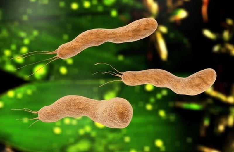 Helicobacter pylori: cos'è, come si manifesta e la terapia