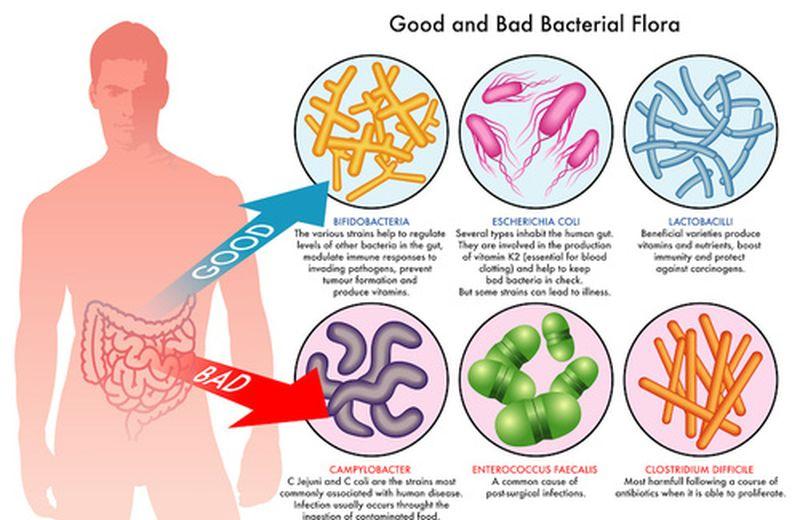 Flora batterica intestinale: come prendersene cura