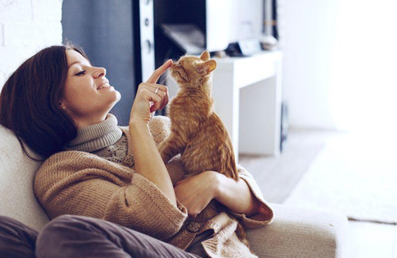 Il potere terapeutico dei gatti