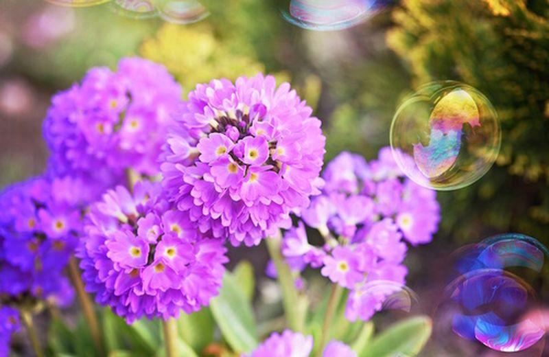 Pulizie di primavera: ecco come organizzarle