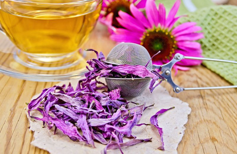 Infusi con echinacea: ricette, benefici e uso