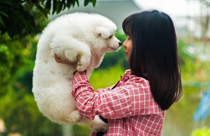 Parole magiche per animali
