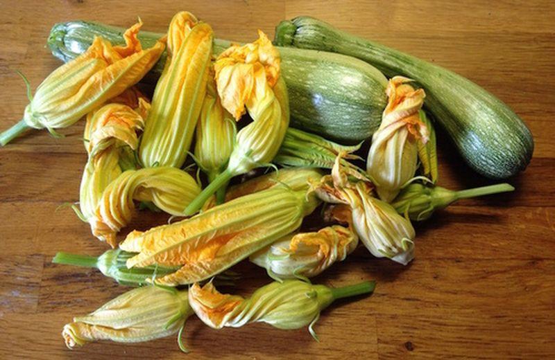 Fiori di zucca: benefici e ricette