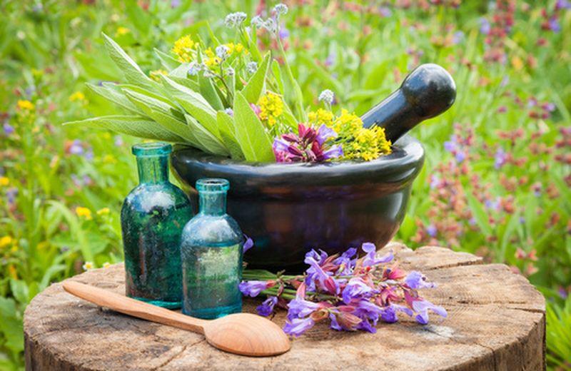 Le piante disinfettanti e battericide