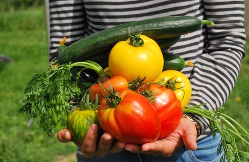 Quali sono i vantaggi dei prodotti biologici