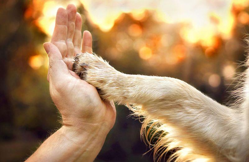 La Giornata mondiale del cane