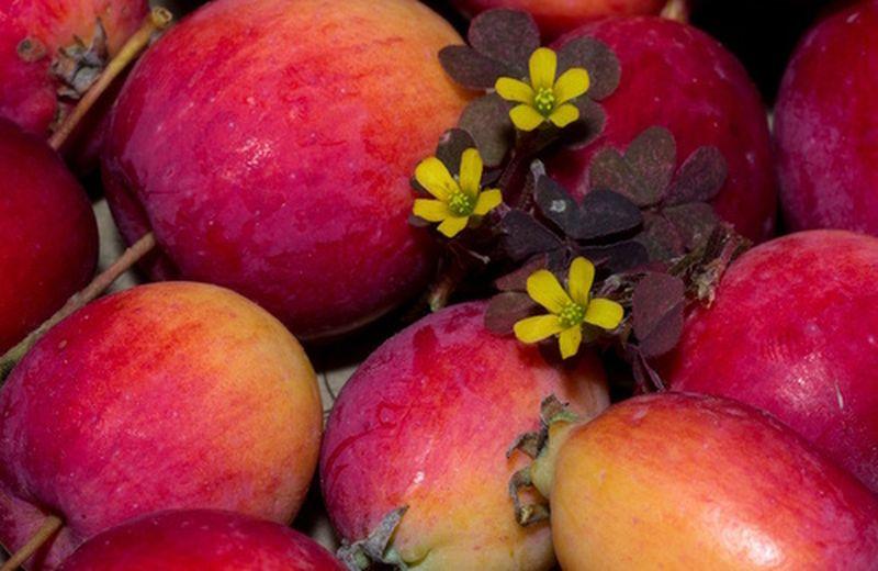 Uso cosmetico dell'aceto di mele