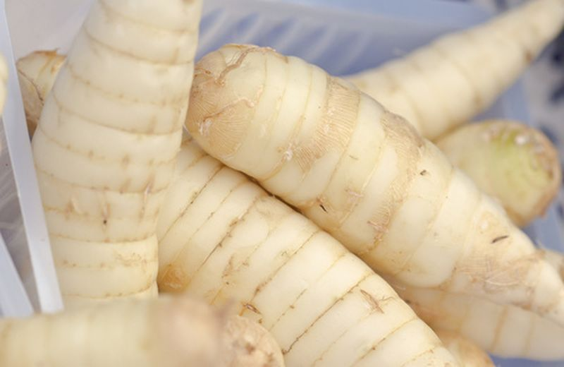 Fecola di maranta, radice senza glutine