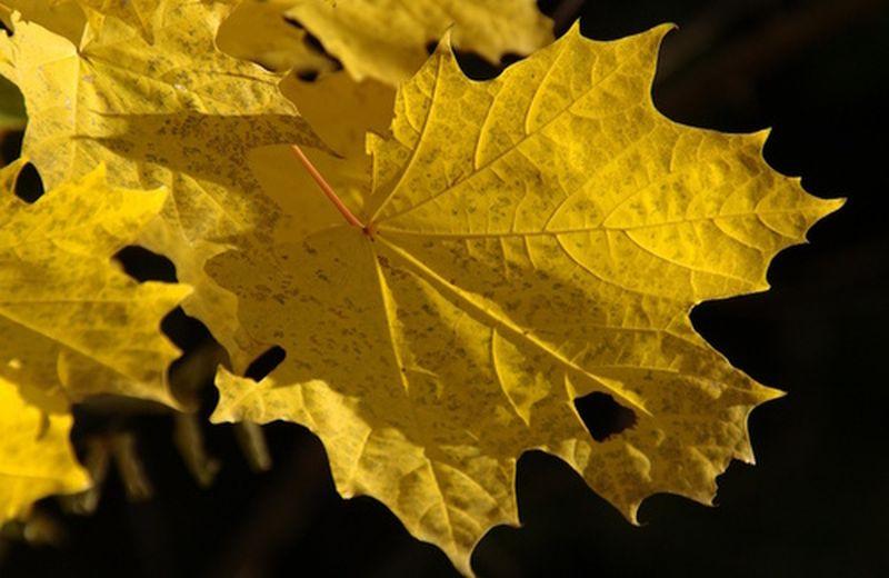 Come affrontare l'autunno con lo shiatsu