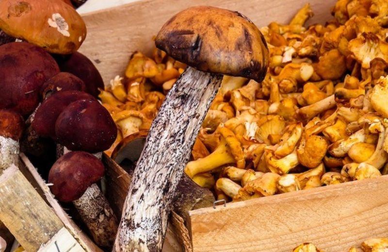 I funghi autunnali, come riconoscerli