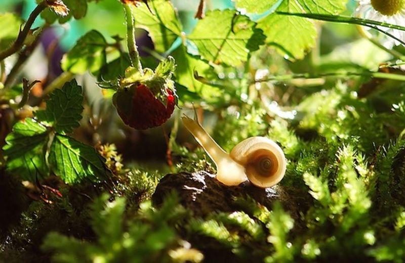 Giardino commestibile: cos'è e come farlo
