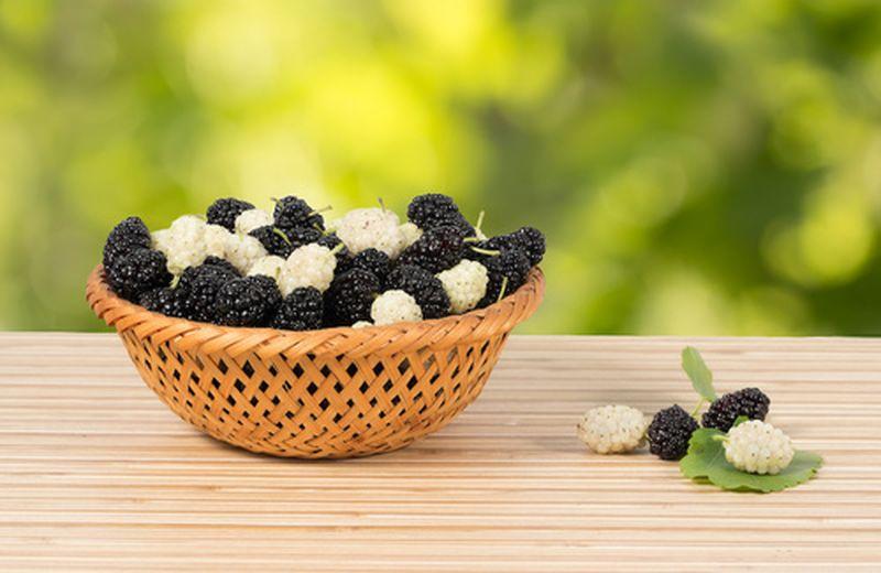 Gelsi bianchi e neri: proprietà benefici e ricette