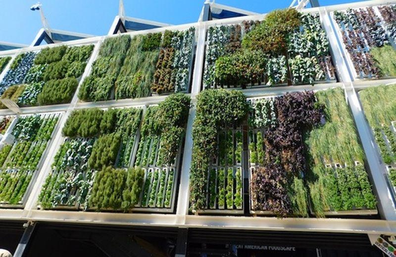 Creeper wall, le pareti verdi ecologiche