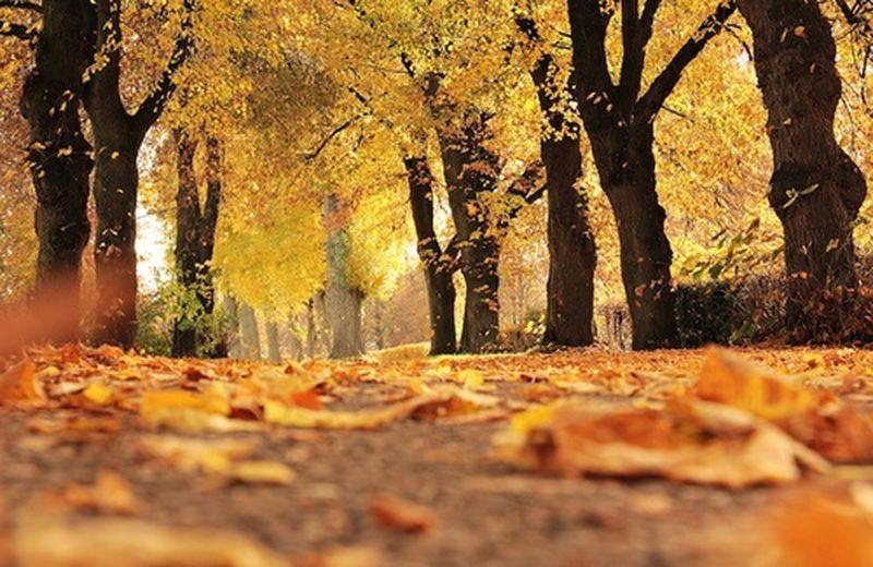 Giornata nazionale degli alberi, i maestri di vita