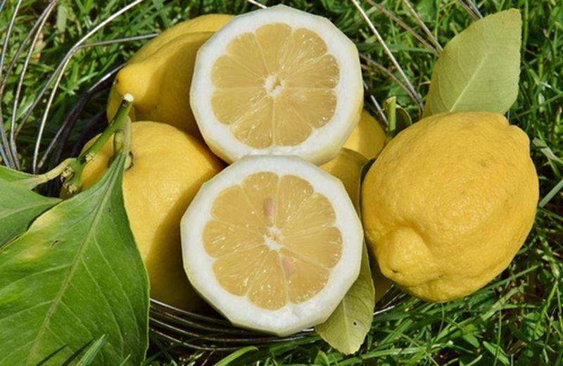 I limoni e la loro coltivazione