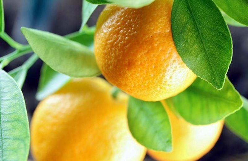 Frutta top di febbraio, le arance