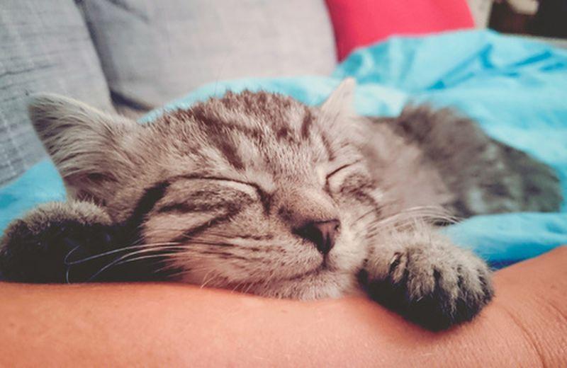 Il 17 febbraio è la Giornata internazionale del gatto