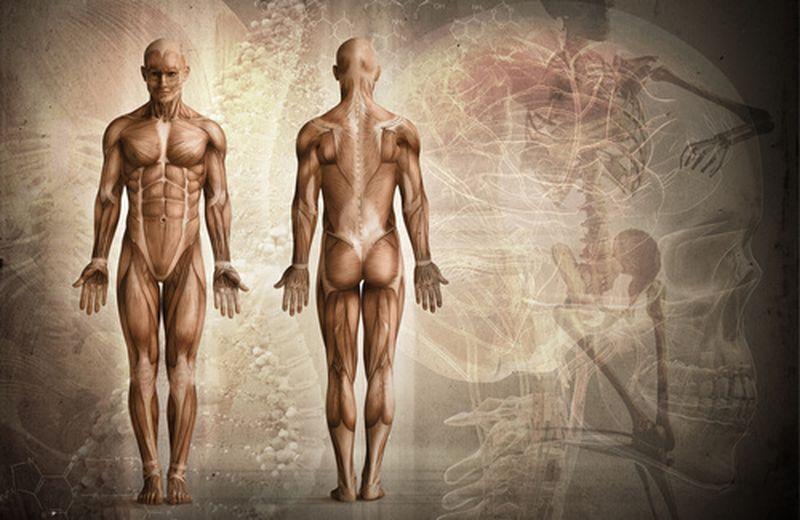 Dolori muscolari: possibili cause e principali rimedi