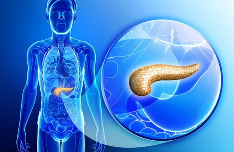 Quali sono le funzioni del pancreas