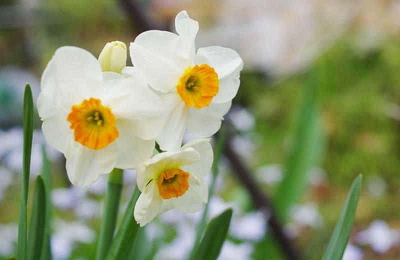 Equinozio di primavera e depurazione organica