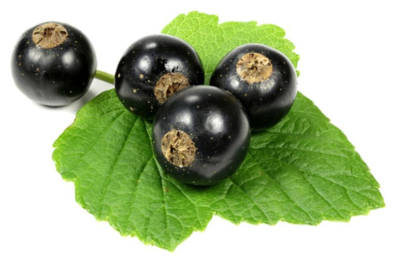 Ribes Nero l'antiossidante naturale