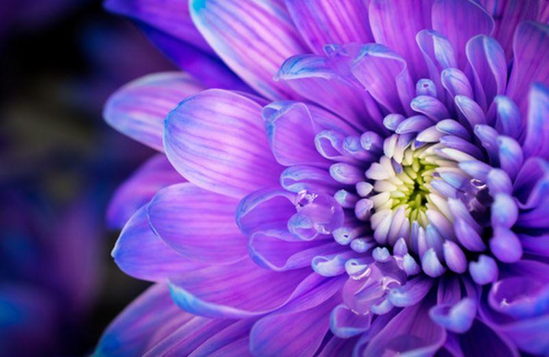 I fiori di maggio per un terrazzo pieno di colore