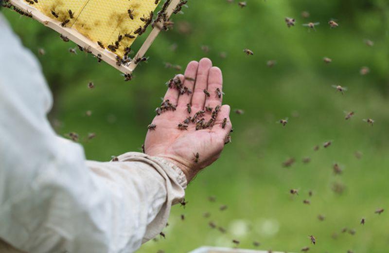 Salute delle api e sorti del nostro pianeta