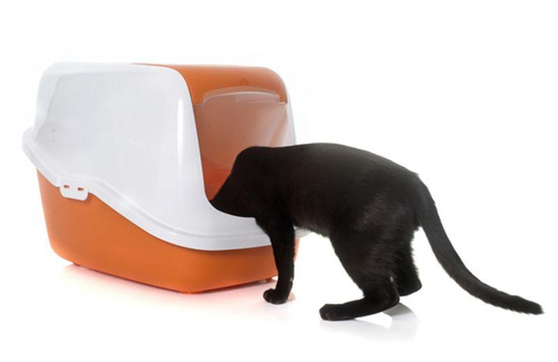 Come eliminare l'odore della pipì del gatto in modo naturale