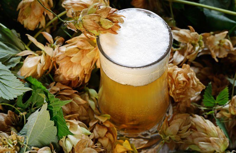 Luppolo e birra, un legame inscindibile