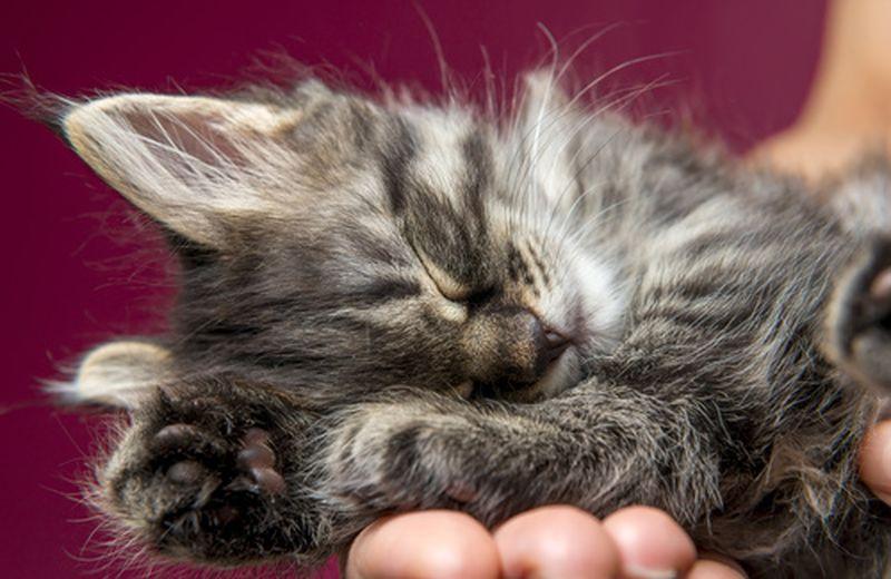 Il massaggio olistico per cani e gatti