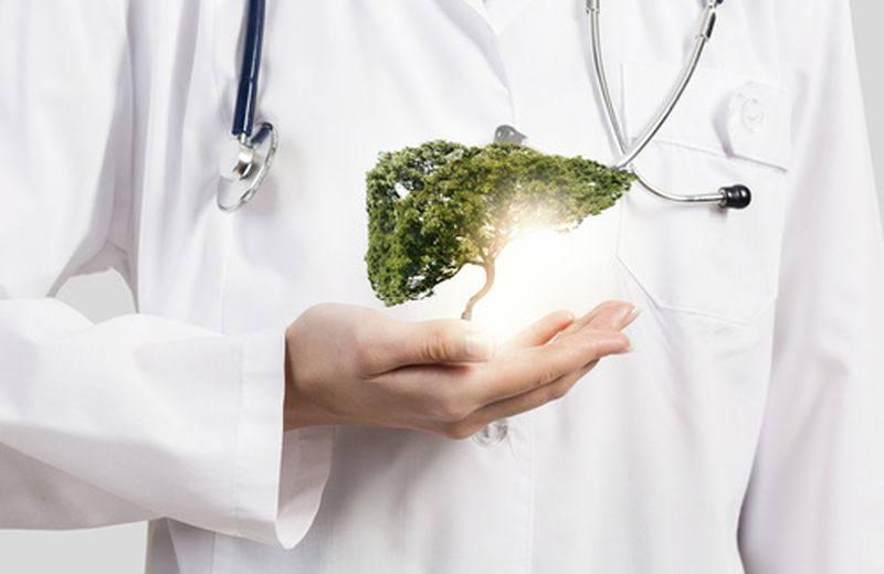 Le piante medicinali per il fegato
