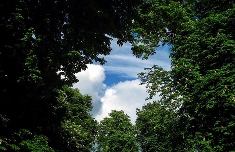 EcoTree, investire piantando alberi