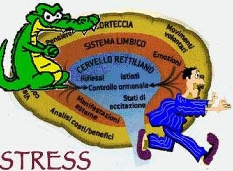 Il cervello... che stress!